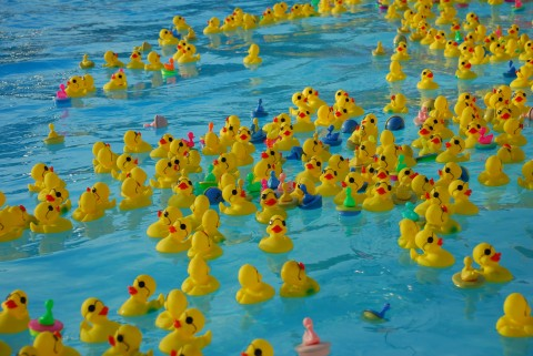 duck-derby-duck-race.jpg